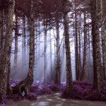 ファンタジーの森
